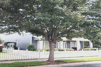 Large tree in front of blue house with white pickett fence
