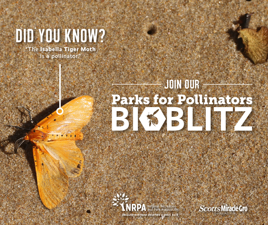 Moth tiger with the word Parks for Pollinators BioBlitz written over in white text