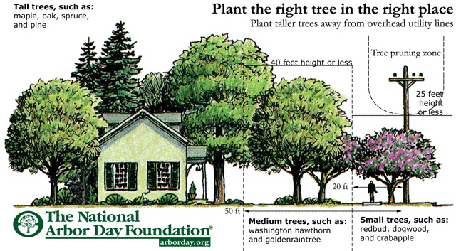 Infographic from the National Arbor Day Foundation about where to plant the right tree in the right place